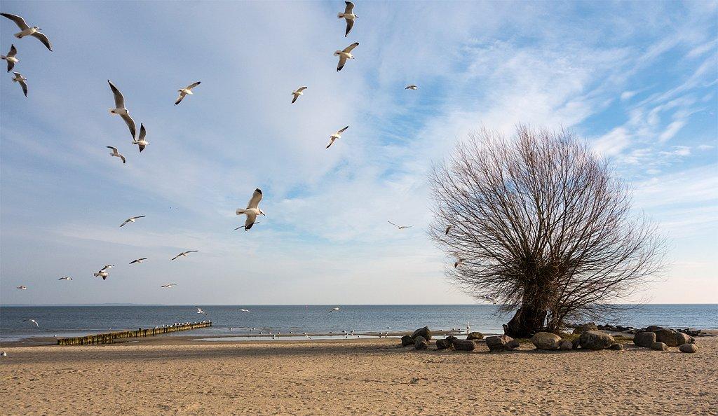 ueckermuende-strand.jpg