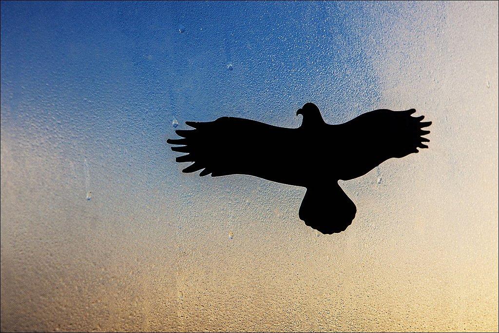 schattenvogel-2-amrum.jpg