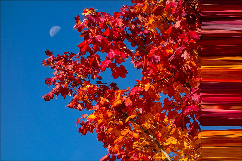 Herbstmond-2.jpg