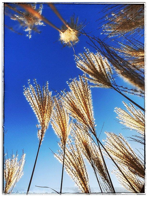 britzer-garten-wintersonne.jpg
